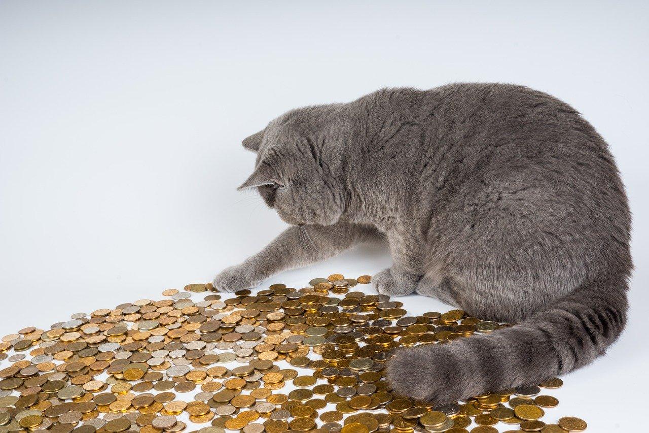 חתול שומר על כסף